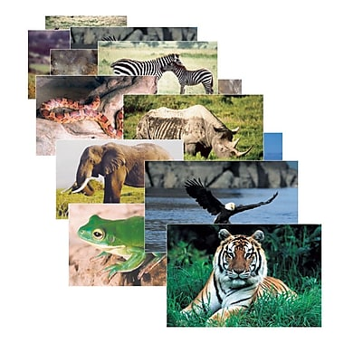 Real Life Learning, Wild Animals Posters Set