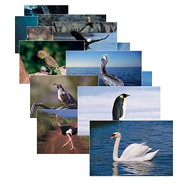 Real Life Learning, Birds Posters Set
