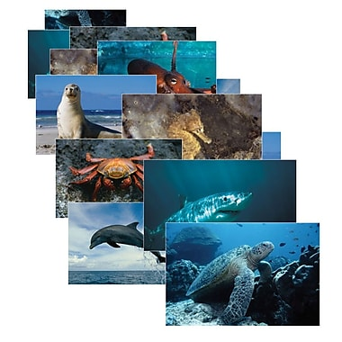 Real Life Learning, Sea Life Posters Set