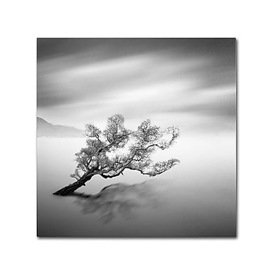 Trademark Fine Art 'Water Tree VI' 14