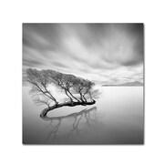 Trademark Fine Art 'Water Tree VII'
