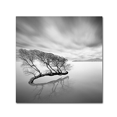 Trademark Fine Art 'Water Tree VII' 24