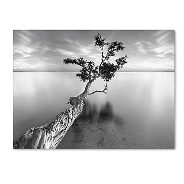 Trademark Fine Art 'Water Tree XIII' 35