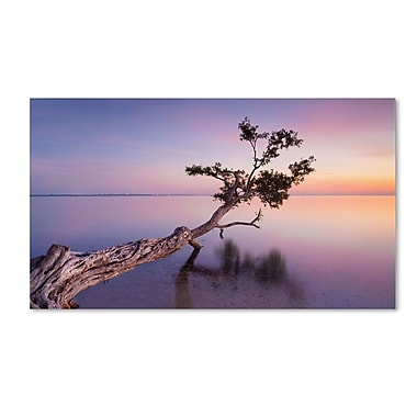 Trademark Fine Art 'Water Tree XV' 30