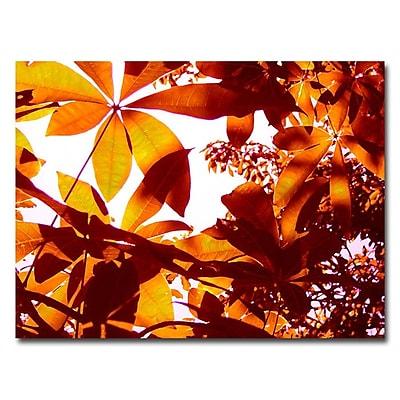 Trademark Fine Art 'Light Coming Through Tree Leaves' 18