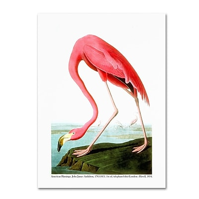 "Trademark Fine Art 'American Flamingo' 24"" x 32"" Canvas Art"