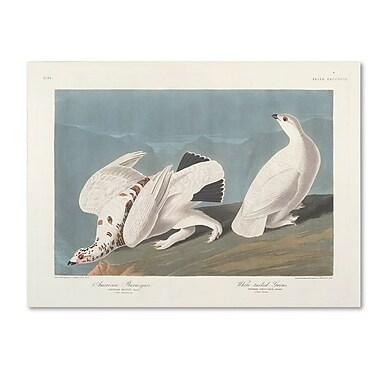 Trademark Fine Art 'American Ptarmigan' 35