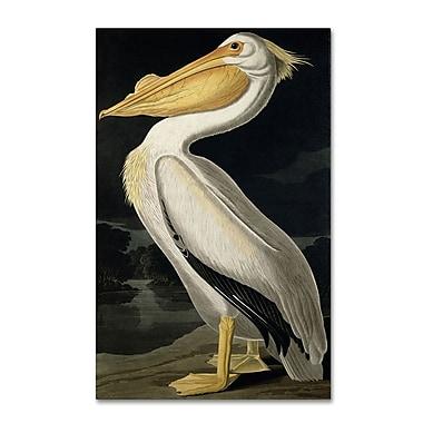 Trademark Fine Art 'American White Pelican' 22