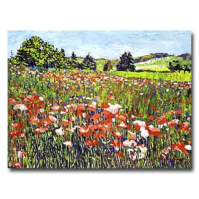 Trademark Fine Art 'Poppy Fields of France' 24