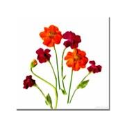 """Trademark Fine Art 'Orange Cosmos' 35"""" x 35"""" Canvas Art"""