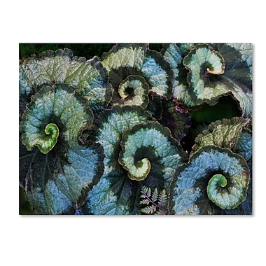 Trademark Fine Art 'Escargot Begonia' 14