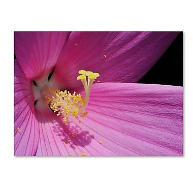 Trademark Fine Art 'Inside a Pink Hibiscus' 22