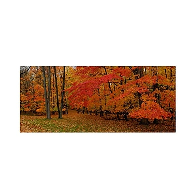 Trademark Fine Art 'Ohio Autumn'