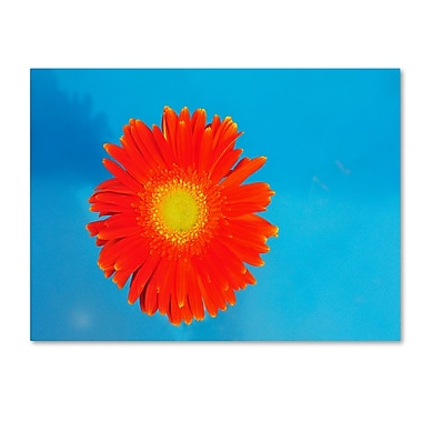Trademark Fine Art 'Orange and Blue' 16