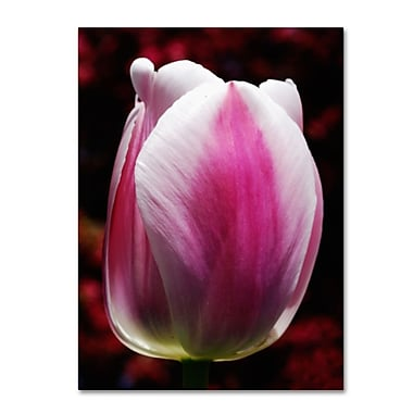 Trademark Fine Art 'Perfect Pink and White Tulip' 14