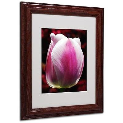 Trademark Fine Art 'Perfect Pink and White Tulip' 11