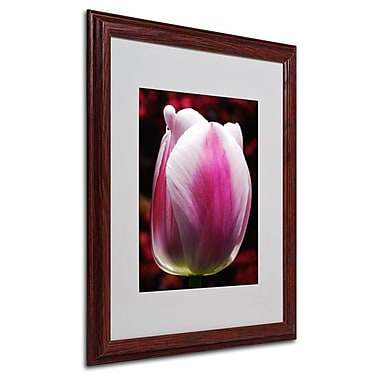 Trademark Fine Art 'Perfect Pink and White Tulip' 16