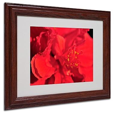 Trademark Fine Art 'Red Red Hibiscus' 11