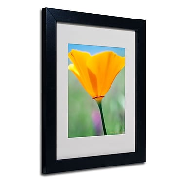Trademark Fine Art 'California Poppy Closeup'