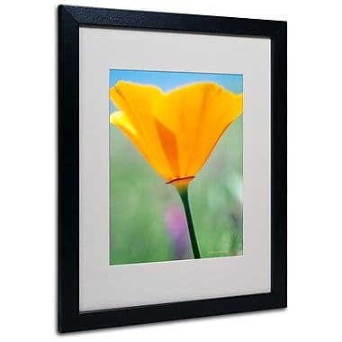 Trademark Fine Art 'California Poppy Closeup' 16