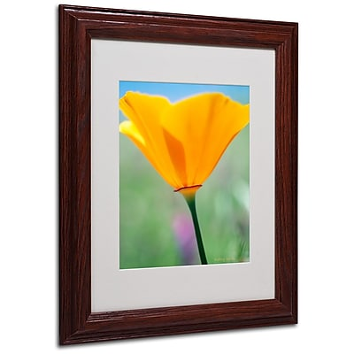 Trademark Fine Art 'California Poppy Closeup' 11