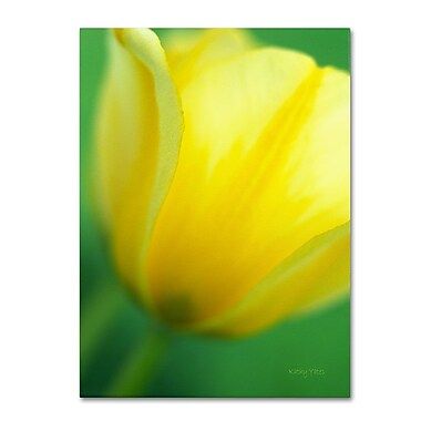 Trademark Fine Art 'Hint of a Tulip' 30