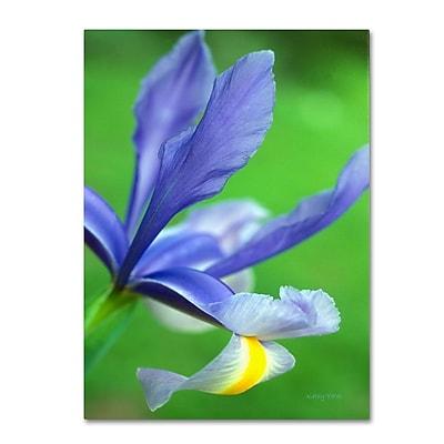 Trademark Fine Art 'Spring Iris' 14