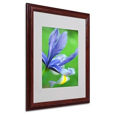 Trademark Fine Art 'Spring Iris' 16