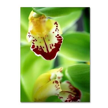 Trademark Fine Art 'Cymbidium Seafoam Emerald Orchid' 14