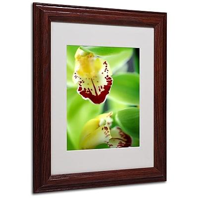 Trademark Fine Art 'Cymbidium Seafoam Emerald Orchid' 11