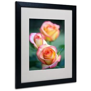 Trademark Fine Art 'Rose Trio' 16