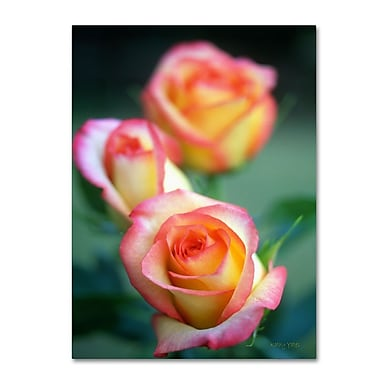 Trademark Fine Art 'Rose Trio' 22