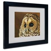 "Trademark Fine Art 'Barred Owl Portrait' 16"" x 20"" Black Frame Art"