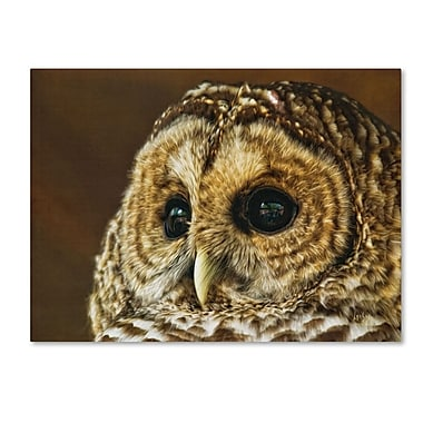 Trademark Fine Art 'Barred Owl Portrait' 30