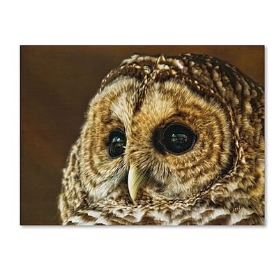 Trademark Fine Art 'Barred Owl Portrait' 14