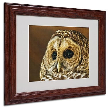 Trademark Fine Art 'Barred Owl Portrait' 11