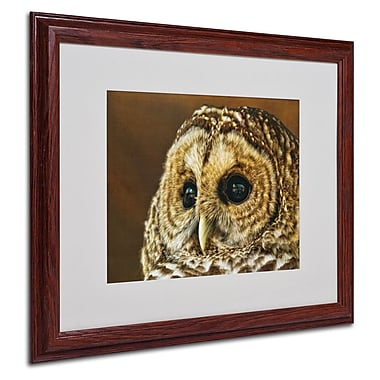 Trademark Fine Art 'Barred Owl Portrait' 16