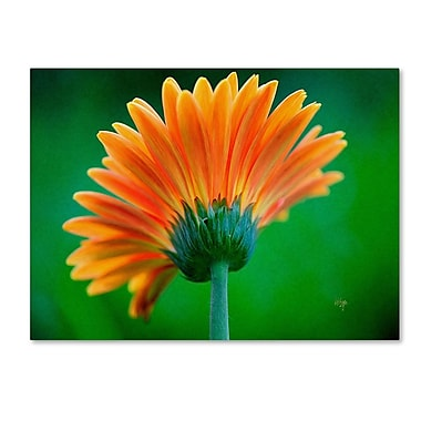 Trademark Fine Art 'Orange Burst' 30