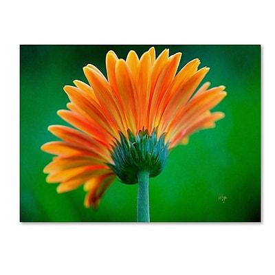 Trademark Fine Art 'Orange Burst' 14