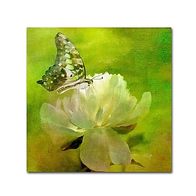 Trademark Fine Art 'Malachite on Peony' 24