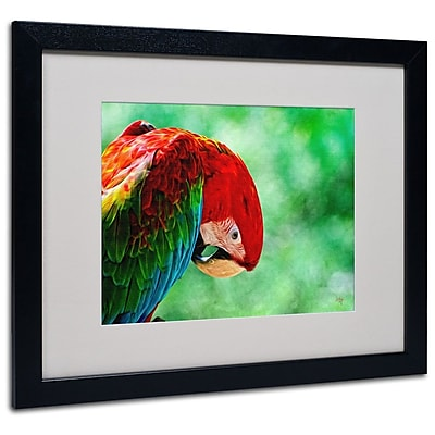 Trademark Fine Art 'Colorful Macaw' 16