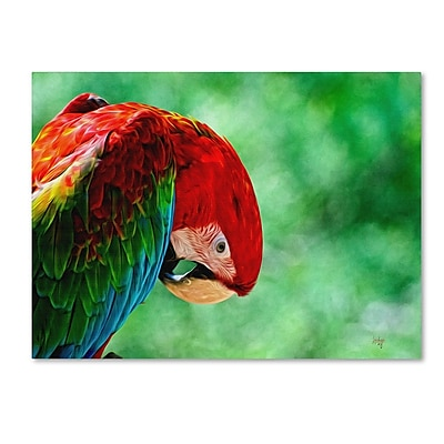 Trademark Fine Art 'Colorful Macaw' 30