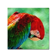 """Trademark Fine Art 'Colorful Macaw Square Format' 35"""" x 35"""" Canvas Art"""