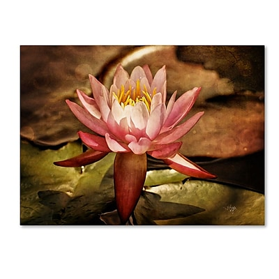 Trademark Fine Art 'Magic Lily' 22