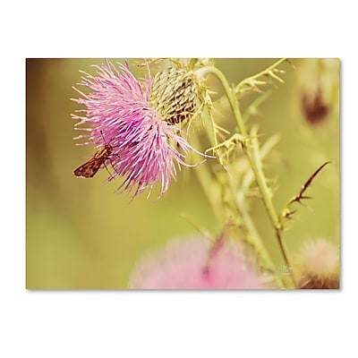 Trademark Fine Art 'Skipper On Pink Thistle' 22
