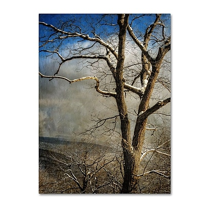 Trademark Fine Art 'Tree In Winter' 14