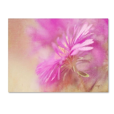 Trademark Fine Art 'Dewy Pink Aster' 30