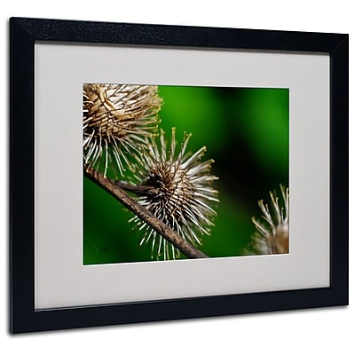 Trademark Fine Art 'Prickly' 16