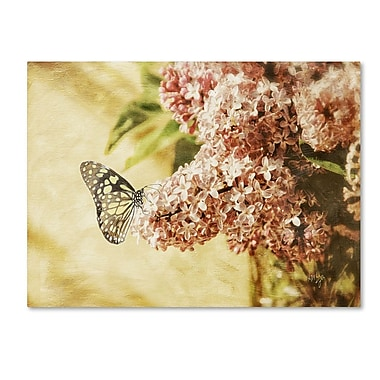 Trademark Fine Art 'Sweet Lilacs' 22