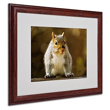 Trademark Fine Art 'Smiling Squirrel' 16